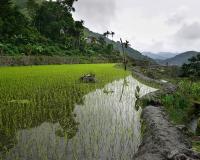 FILIPPINE-2352