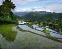 FILIPPINE-2390